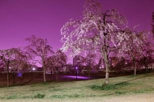 タイトルクリックで本文へ  2012.4.10 荒川区尾久の原公園