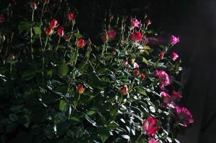タイトルクリックで本文へ  2012.5.15 荒川区あらかわ遊園